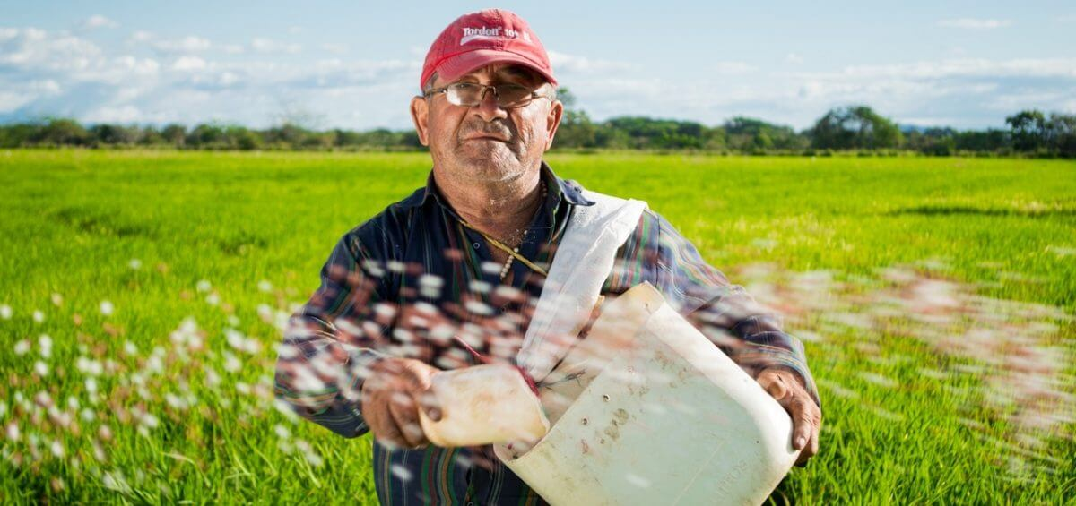 Middle aged man working in a rice crops in Colombia
