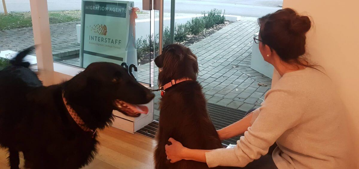 Take your dog to work day at Interstaff